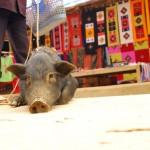 Vietnamas - augintinis Sapa gatvėje :)