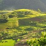 Vietnamas - ryžių terasos aplink Sapa