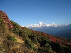 Kelionė į Nepalą - rododendrai ir Daulagirio viršūnės