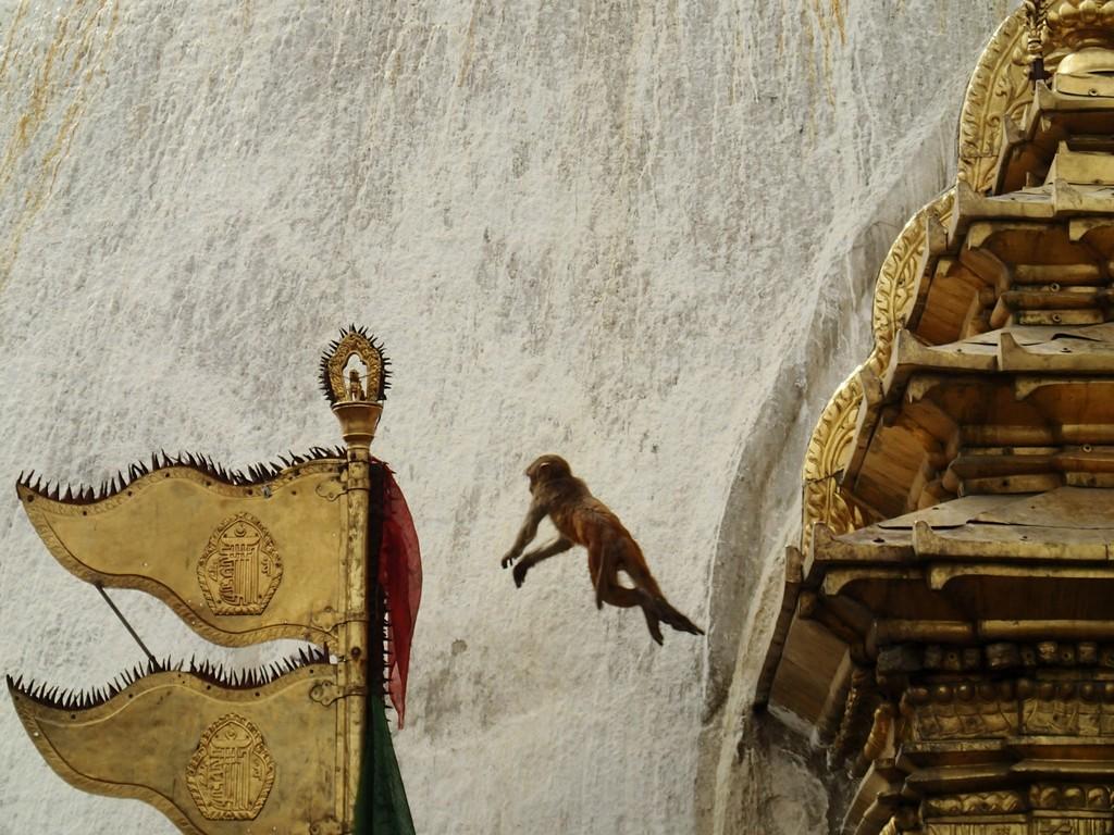 Kelionė į Nepalą - Skraidančios beždžionės