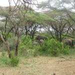 Kilimandžaras - safarisKilimandžaras - safaris