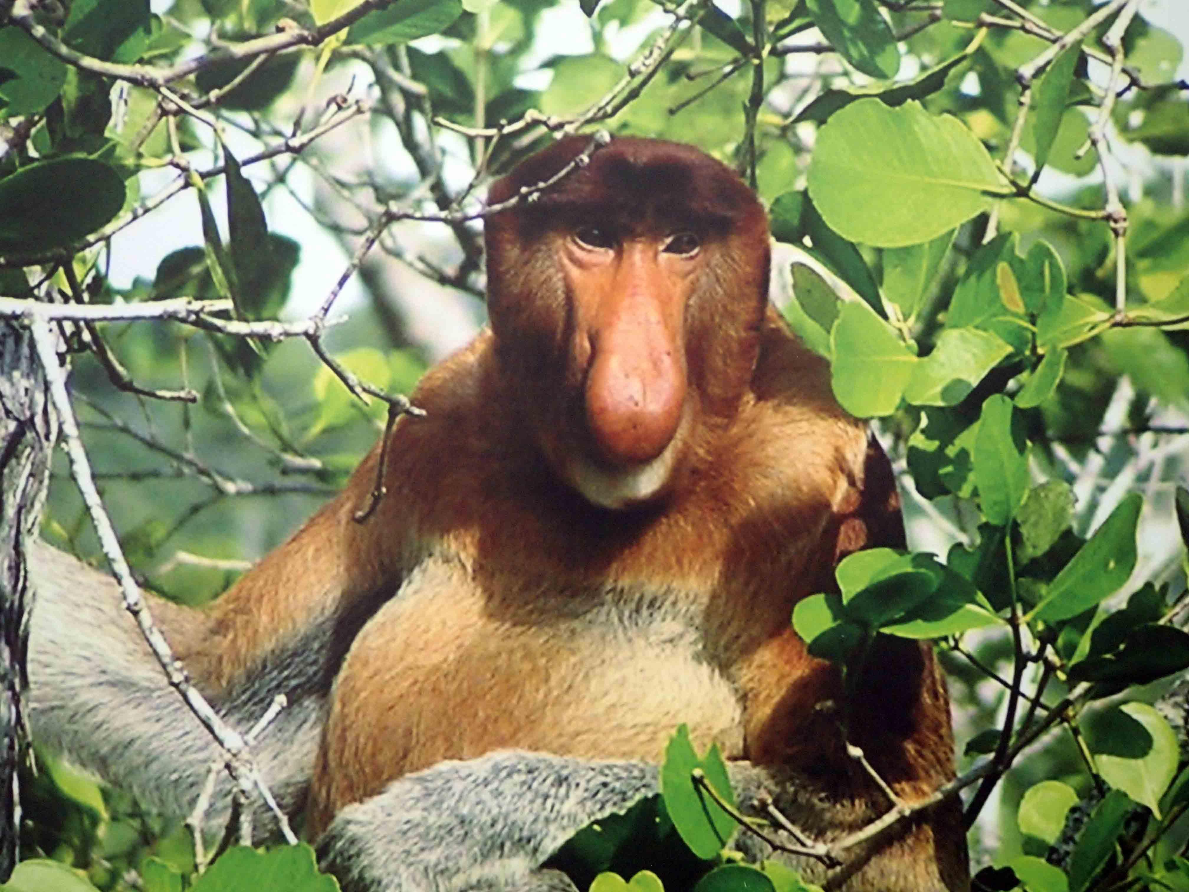 Malaizija - Bako nacionalinis parkas